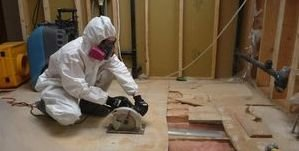 Water Damage League City Mold Removal Process