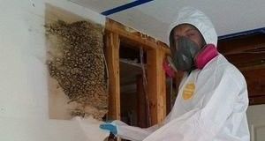 Water Damage Restoration Technician Conducting Moldy Wall Removal