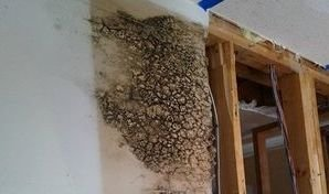 Mold Growth In Drywall After Wall Leak